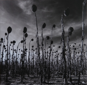 DEAD CAN DANCE Anastasis LIMITED 2LP VINYL 2016